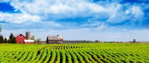 Demo farm fields landscape
