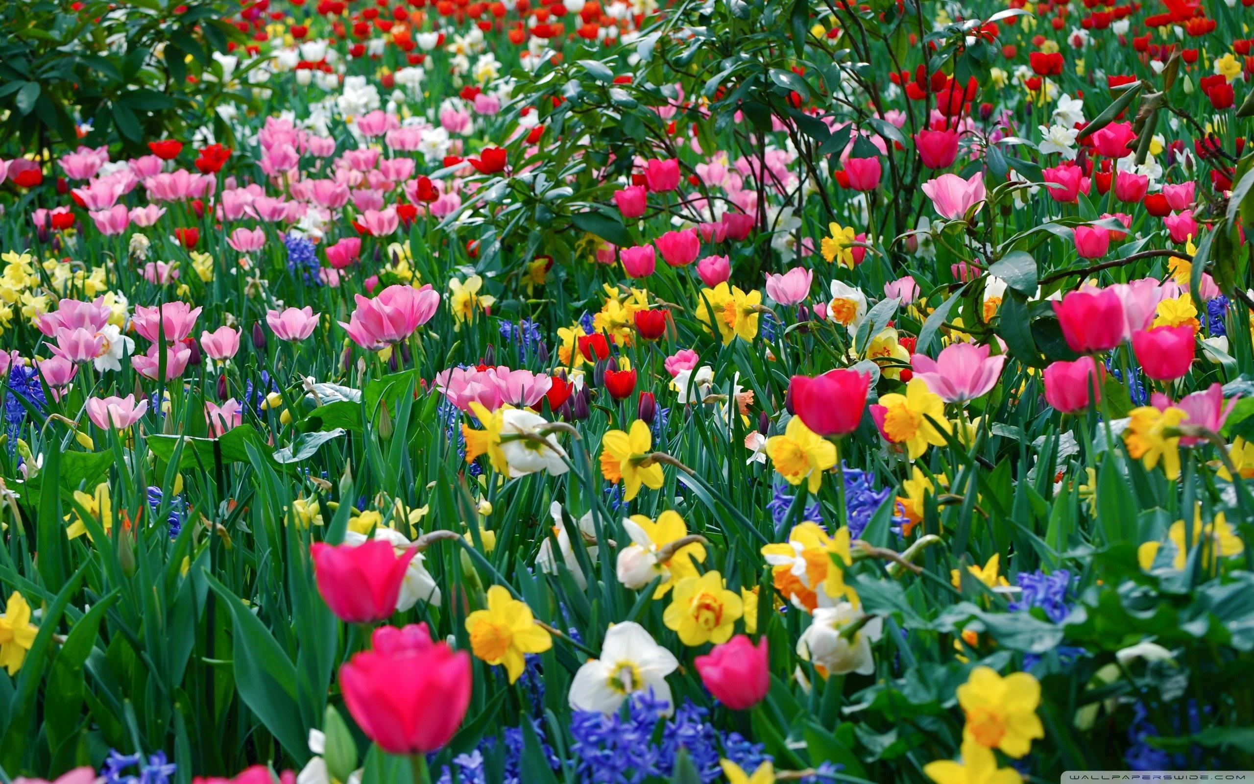 27+ Daffodil Wallpaper Tumblr PNG